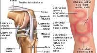 Cuando se practica alguna actividadfísica, estamos propensos a sufrir alguna caída o golpe quecomo consecuencia produzca una lesión en nuestro cuerpo. La mayoría de las lesiones deportivas se deben a […]